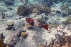 Great Barrier Reef Pictures